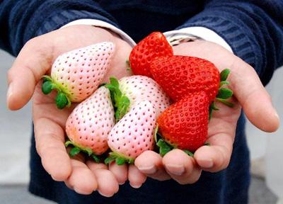 Bron foto: aardbeien academie