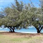 Rotaract Park in Bowen - Australia
